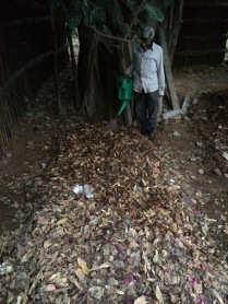 Leaf 'waste' from Gurgaon Leisure Valley park